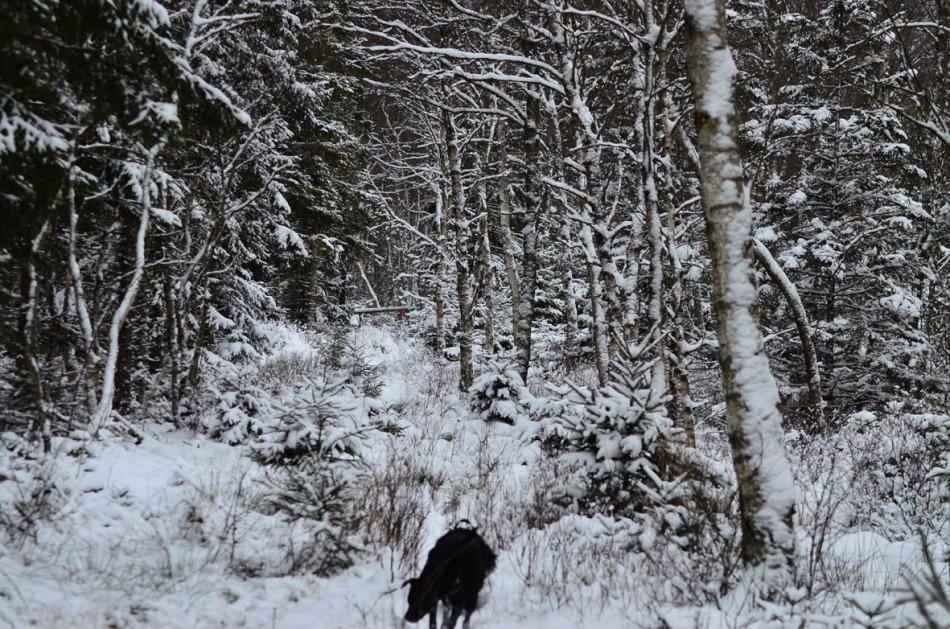 The afternoon walk to the bog was more pleasant since the wind couldn't reach us.