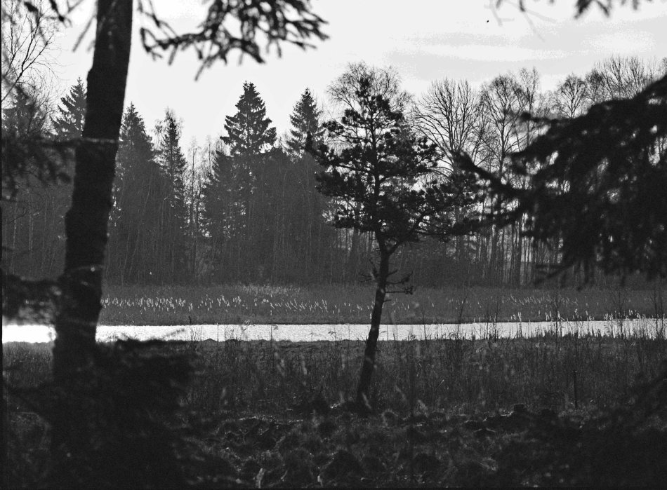 Here are four from my Hasselblad camera. This is the tiny lake I tend to go to every Saturday.