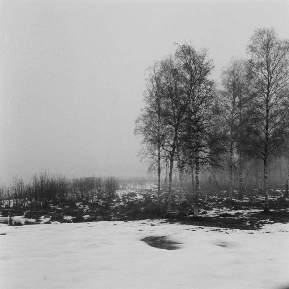 Three påhotos taken with my Rolleicord.