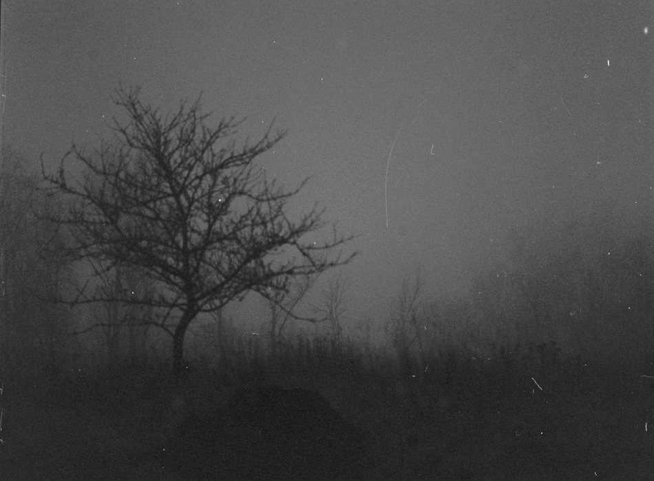 It was really dark outside when I took this photo, it turned out rather good despite all the dust that seems to have been on the film.